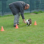 Puppyparcours