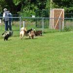 Vrij spelen op het puppyparcours