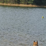 Raena loves playing with the ball and swimming!
