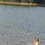 Raena and the ball