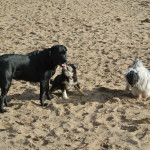 Of ze nu klein of groot zijn, Yndí begroet alle honden en maakt met iedereen vriendjes!