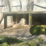 De leeuw!