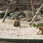 Romantische aapjes!