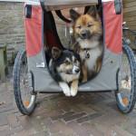 De dames in het fietskarretje