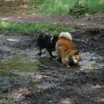 Yndí & Mika lekker aan het rollenbollen in een heerlijk blubberige modderplas